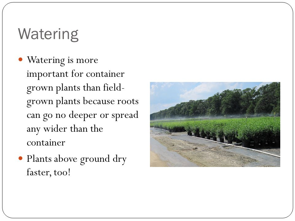 Watering Watering is more important for container grown plants than field- grown plants because roots can go no deeper or spread any wider than the container Plants above ground dry faster, too!