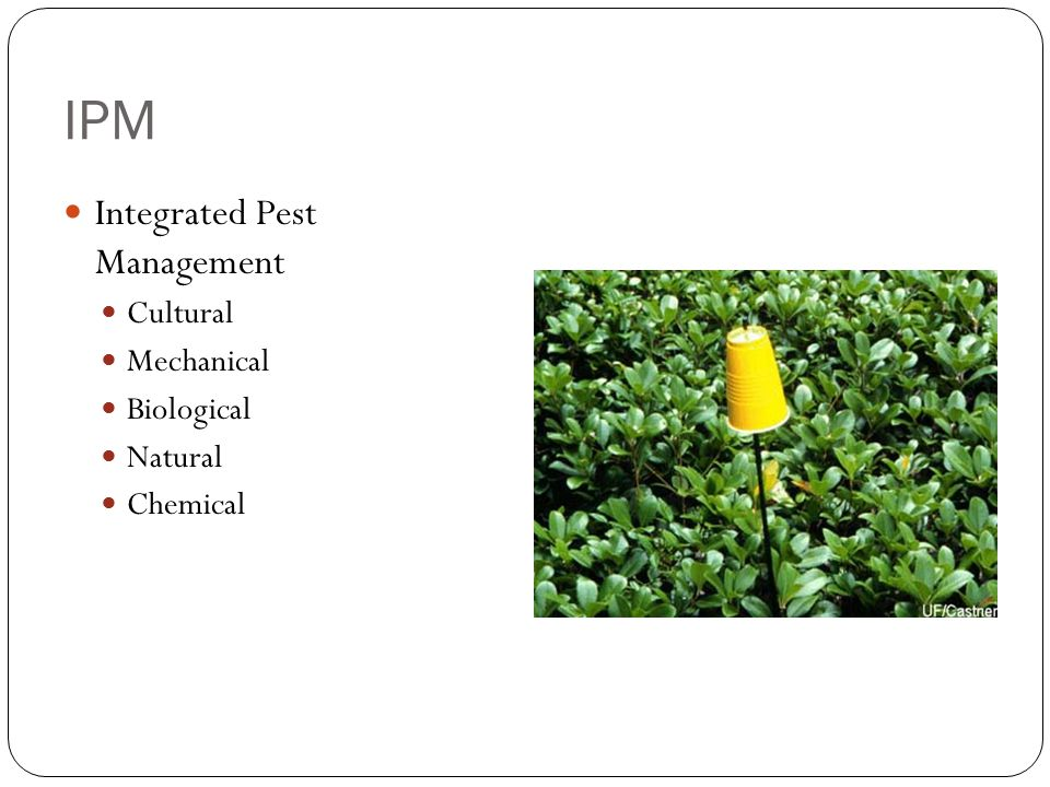 IPM Integrated Pest Management Cultural Mechanical Biological Natural Chemical