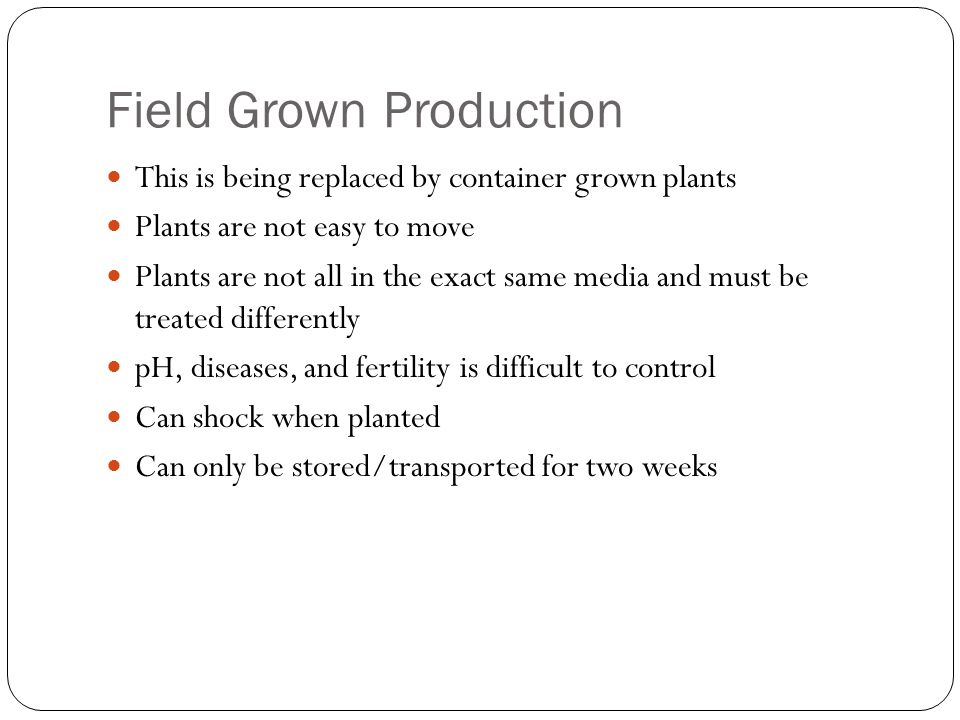 Field Grown Production This is being replaced by container grown plants Plants are not easy to move Plants are not all in the exact same media and must be treated differently pH, diseases, and fertility is difficult to control Can shock when planted Can only be stored/transported for two weeks