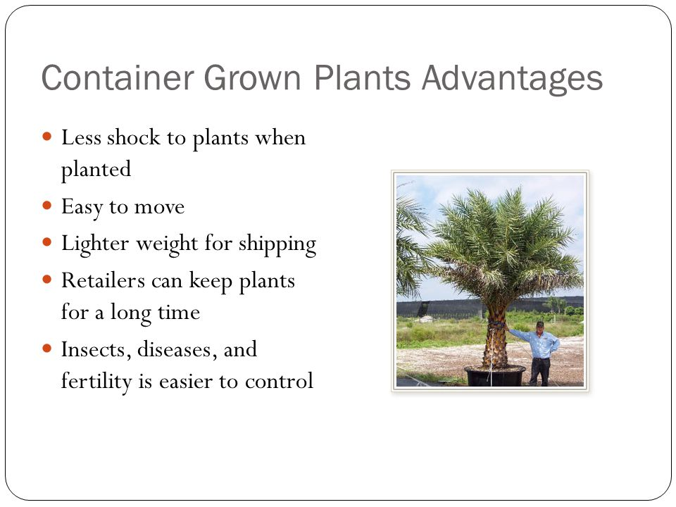Container Grown Plants Advantages Less shock to plants when planted Easy to move Lighter weight for shipping Retailers can keep plants for a long time Insects, diseases, and fertility is easier to control