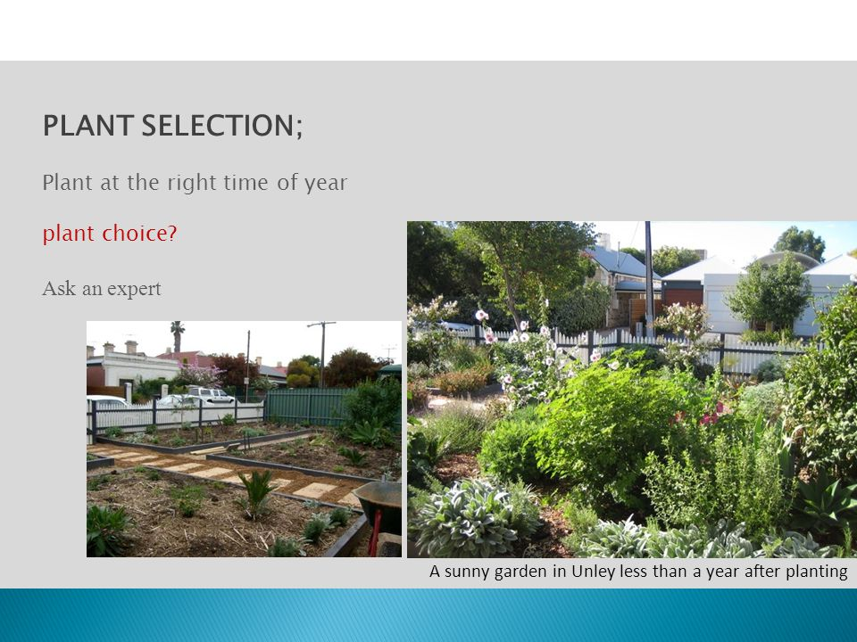 PLANT SELECTION; Plant at the right time of year plant choice? Ask an expert A sunny garden in Unley less than a year after planting