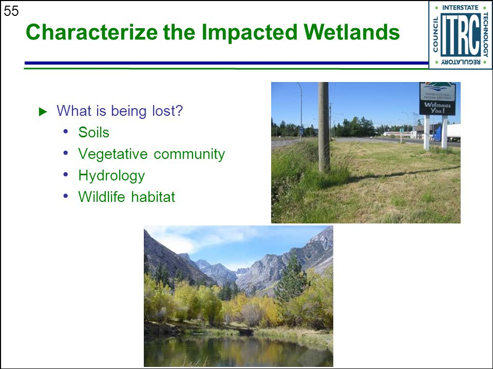 55 Characterize the Impacted Wetlands  What is being lost.
