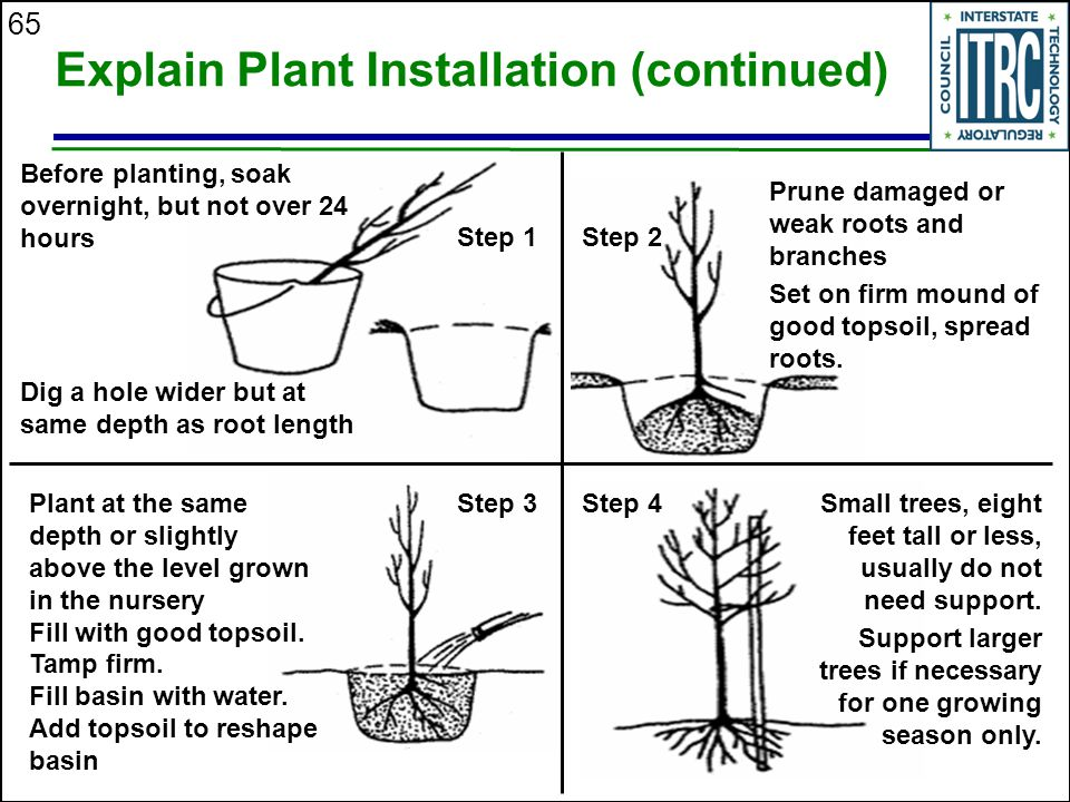 65 Explain Plant Installation (continued) Step 1Step 2 Before planting, soak overnight, but not over 24 hours Dig a hole wider but at same depth as root length Prune damaged or weak roots and branches Set on firm mound of good topsoil, spread roots.