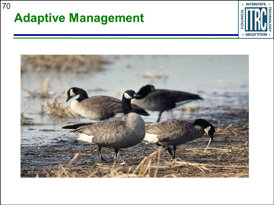 70 Adaptive Management