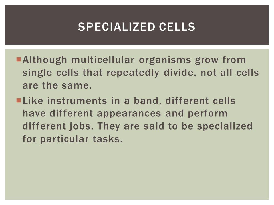  Although multicellular organisms grow from single cells that repeatedly divide, not all cells are the same.