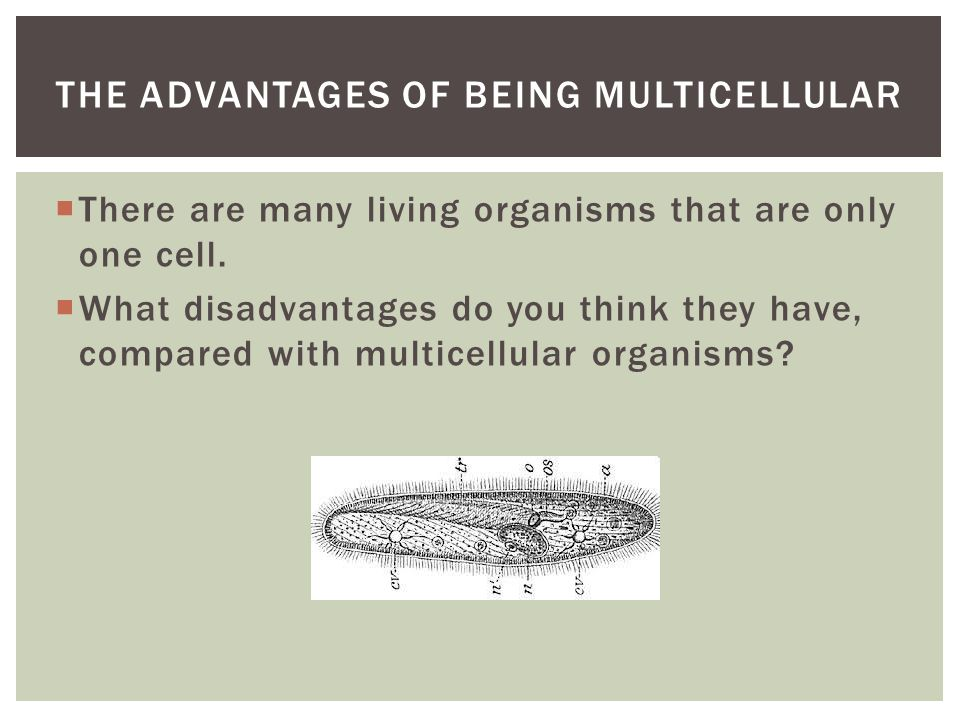  There are many living organisms that are only one cell.
