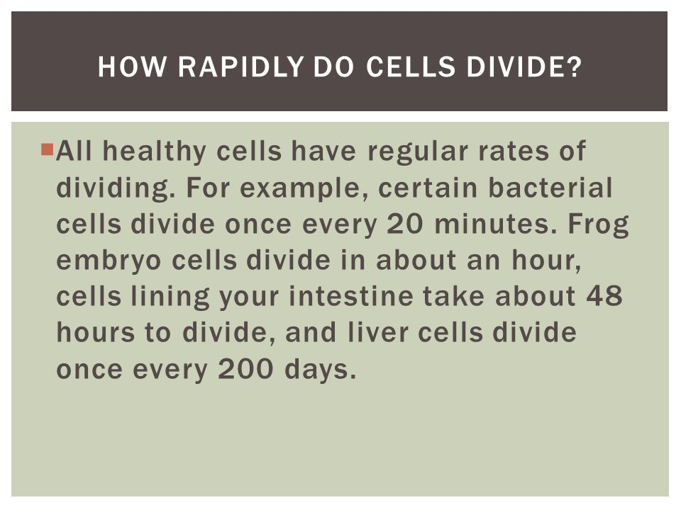  All healthy cells have regular rates of dividing.