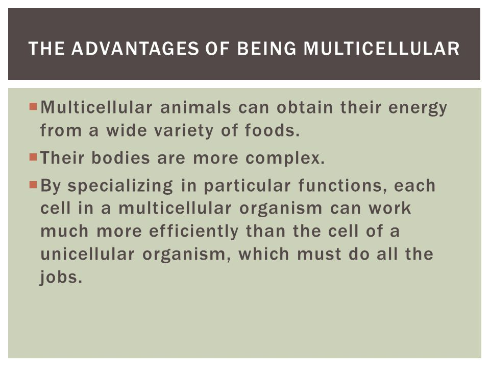  Multicellular animals can obtain their energy from a wide variety of foods.