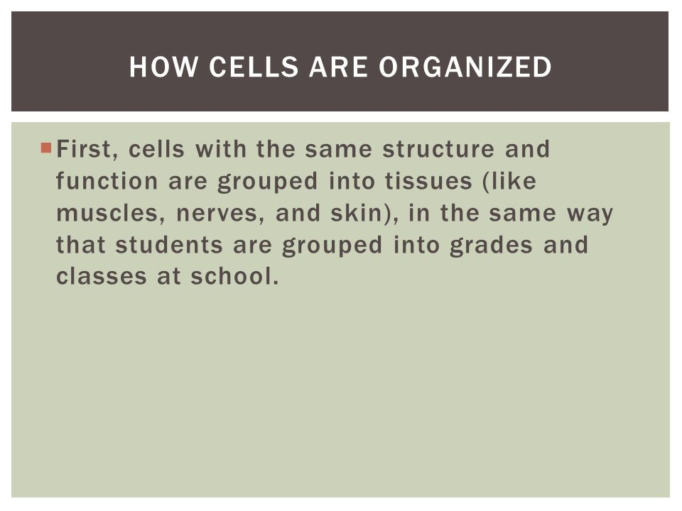  First, cells with the same structure and function are grouped into tissues (like muscles, nerves, and skin), in the same way that students are grouped into grades and classes at school.