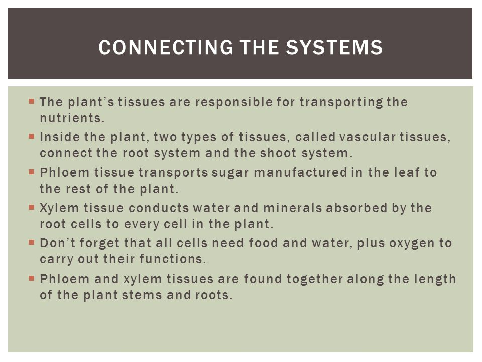  The plant's tissues are responsible for transporting the nutrients.