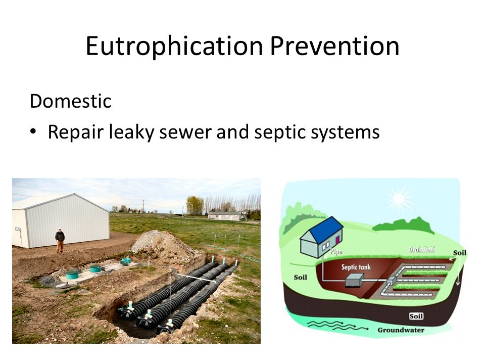 Eutrophication Prevention Domestic Repair leaky sewer and septic systems