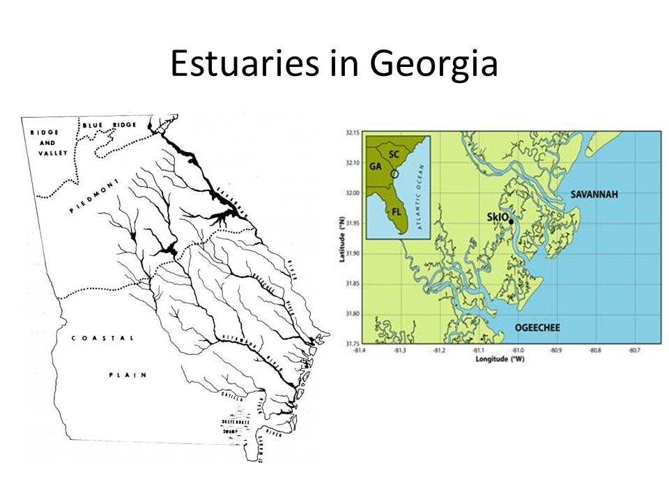 Estuaries in Georgia