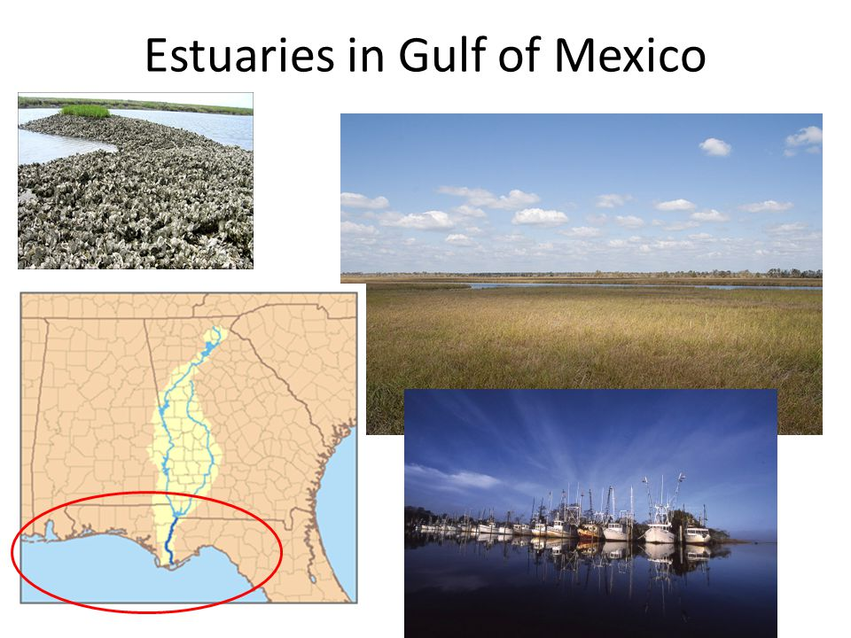 Estuaries in Gulf of Mexico