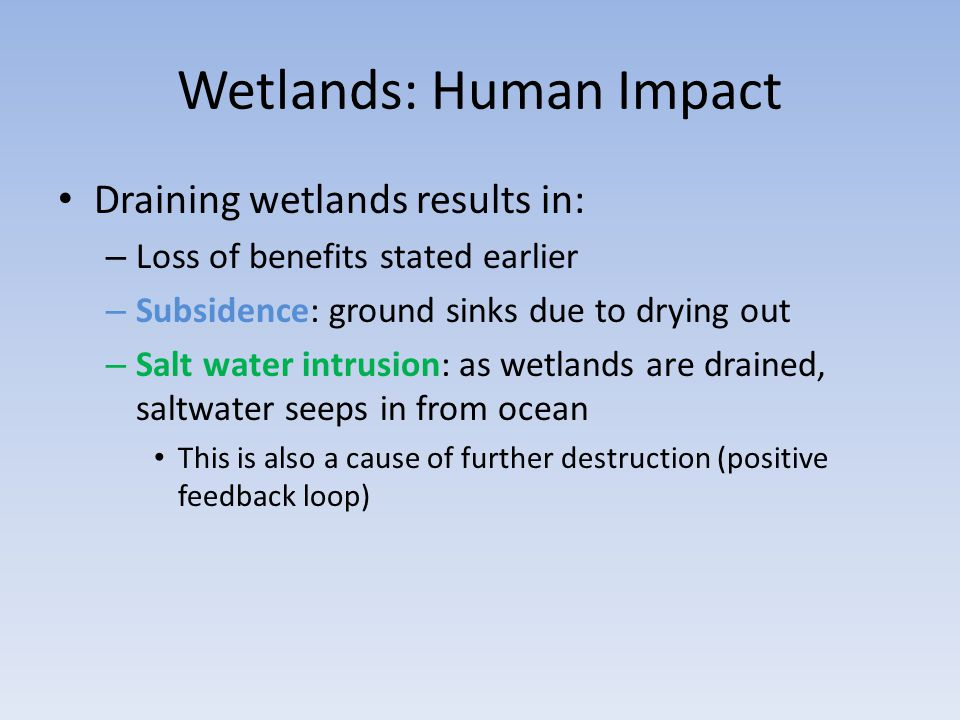 Wetlands: Human Impact Draining wetlands results in: – Loss of benefits stated earlier – Subsidence: ground sinks due to drying out – Salt water intrusion: as wetlands are drained, saltwater seeps in from ocean This is also a cause of further destruction (positive feedback loop)