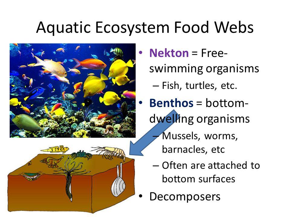 Aquatic Ecosystem Food Webs Nekton = Free- swimming organisms – Fish, turtles, etc. Benthos = bottom- dwelling organisms – Mussels, worms, barnacles,