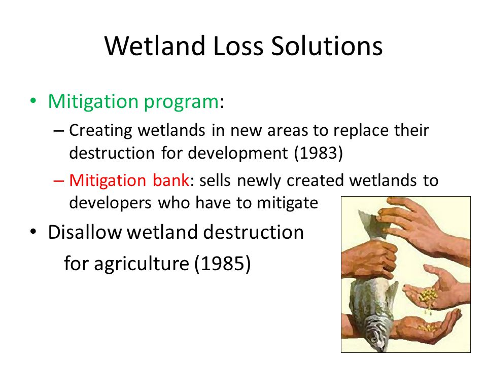 Wetland Loss Solutions Mitigation program: – Creating wetlands in new areas to replace their destruction for development (1983) – Mitigation bank: sells newly created wetlands to developers who have to mitigate Disallow wetland destruction for agriculture (1985)