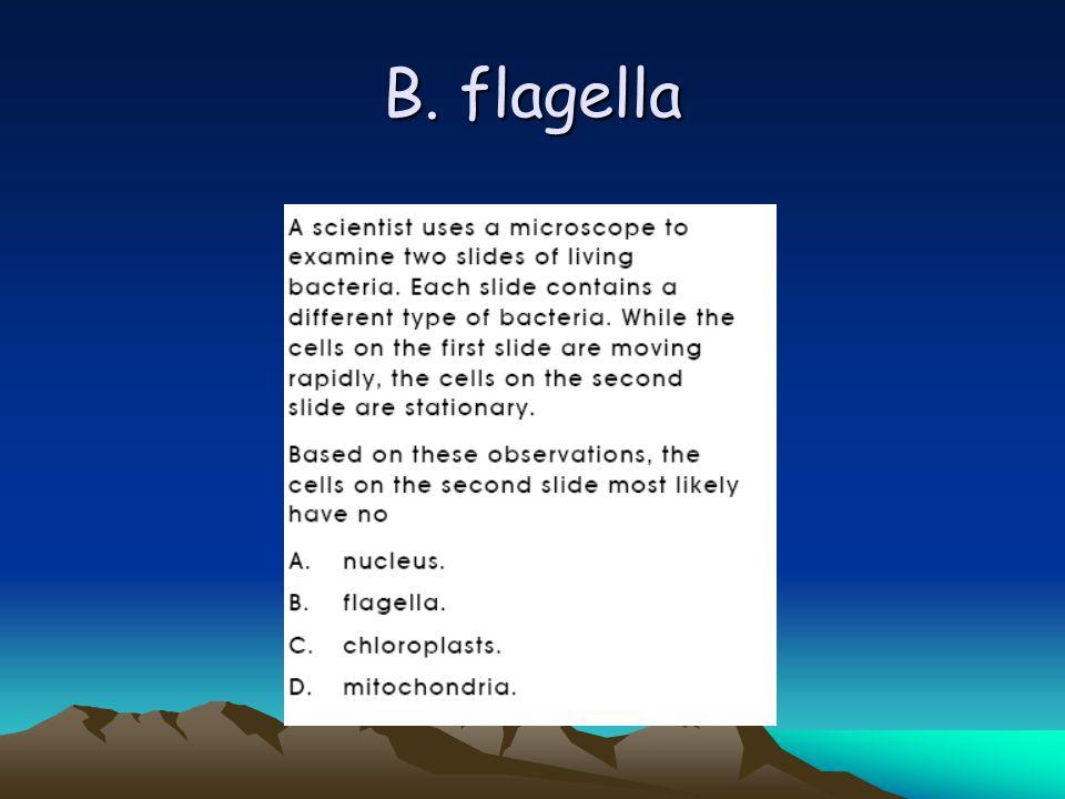B. flagella