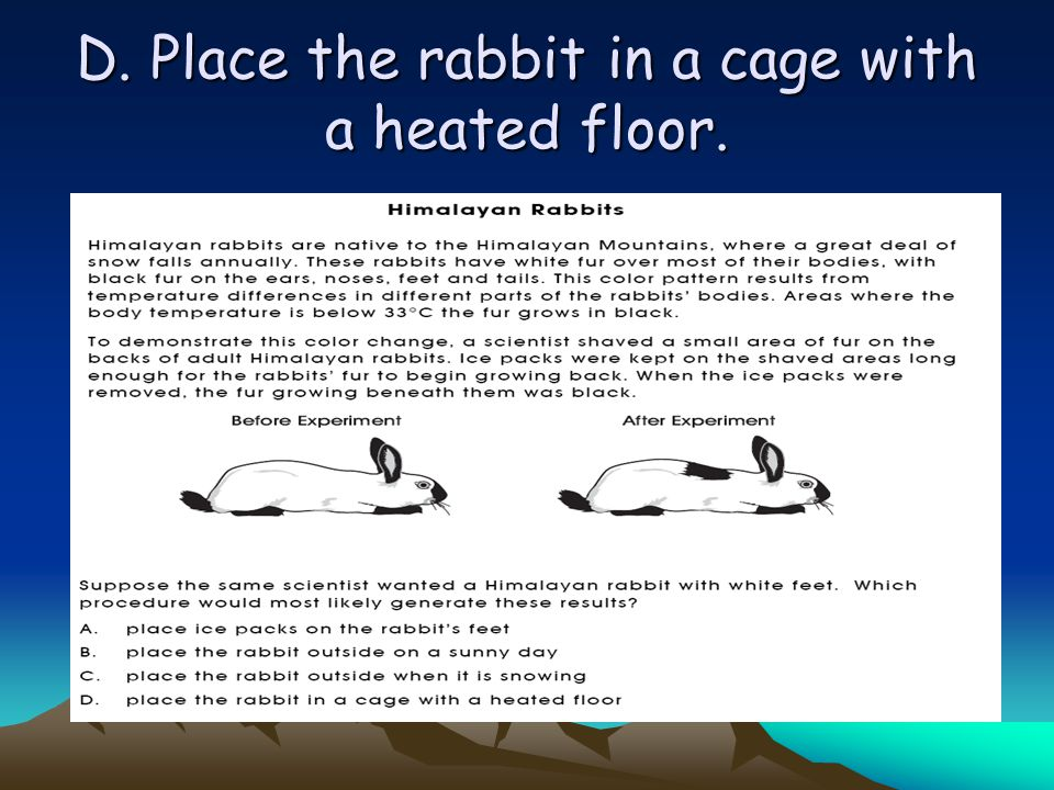 D. Place the rabbit in a cage with a heated floor.