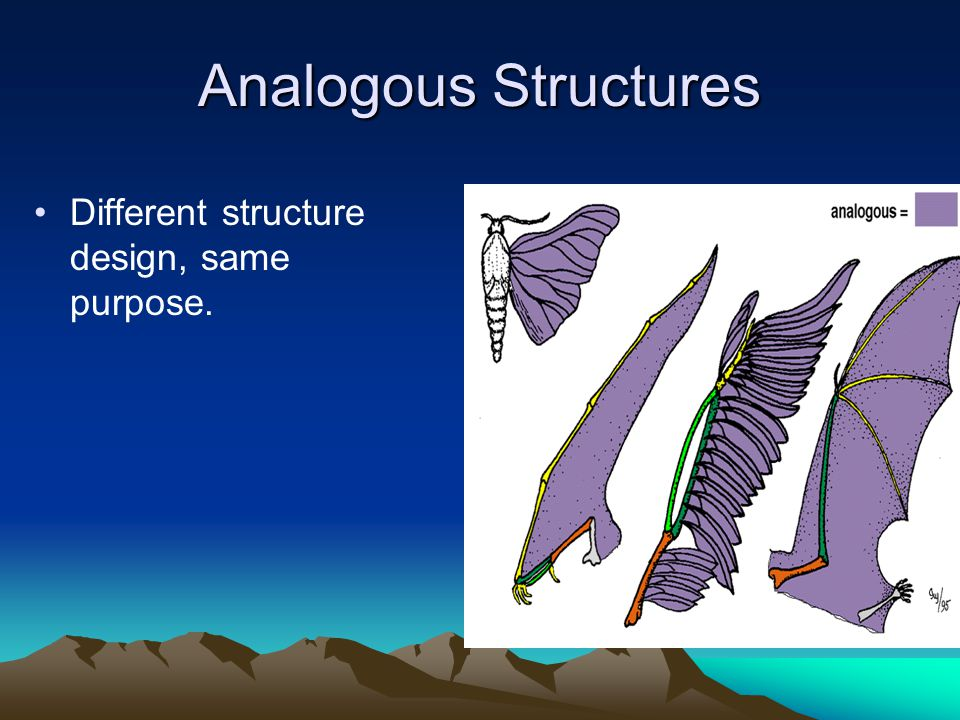 Analogous Structures Different structure design, same purpose.