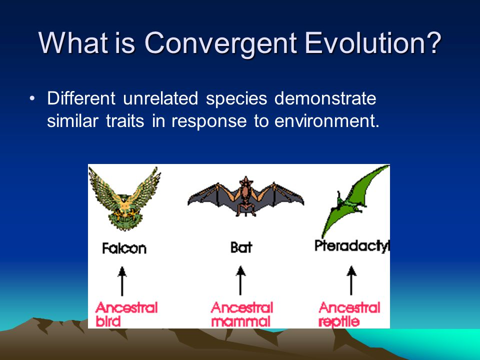 What is Convergent Evolution? Different unrelated species demonstrate similar traits in response to environment.
