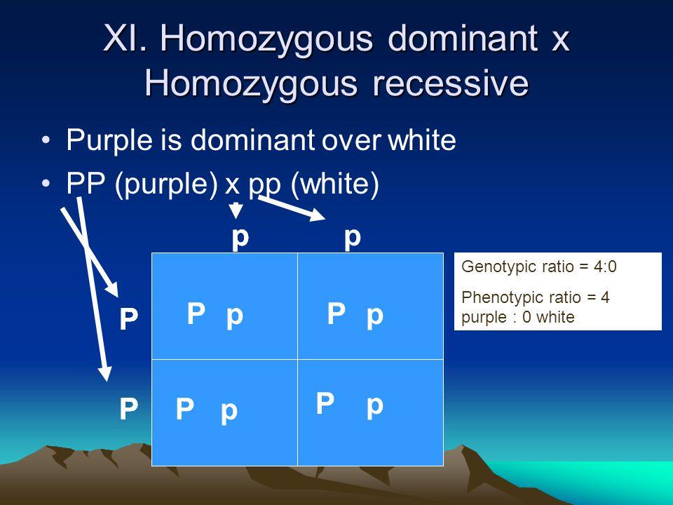 XI. Homozygous dominant x Homozygous recessive Purple is dominant over white PP (purple) x pp (white) P P pp PP PP pp PP P P p p p p Genotypic ratio =