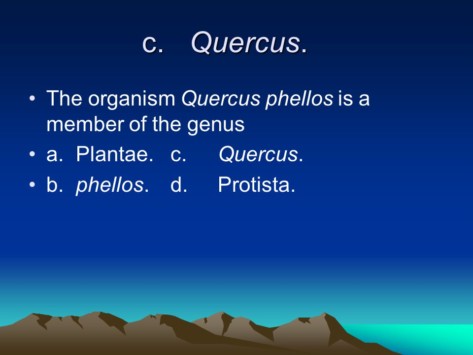 c.Quercus. The organism Quercus phellos is a member of the genus a.Plantae.c.Quercus.