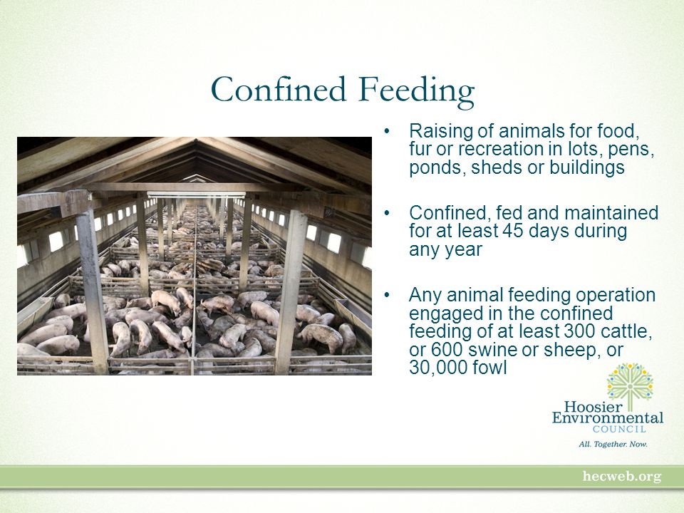 Confined Feeding Raising of animals for food, fur or recreation in lots, pens, ponds, sheds or buildings Confined, fed and maintained for at least 45 days during any year Any animal feeding operation engaged in the confined feeding of at least 300 cattle, or 600 swine or sheep, or 30,000 fowl