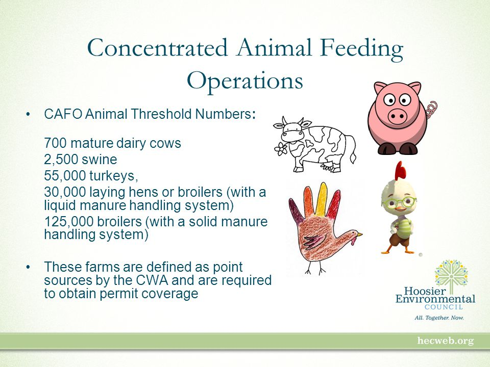 Concentrated Animal Feeding Operations CAFO Animal Threshold Numbers: 700 mature dairy cows 2,500 swine 55,000 turkeys, 30,000 laying hens or broilers (with a liquid manure handling system) 125,000 broilers (with a solid manure handling system) These farms are defined as point sources by the CWA and are required to obtain permit coverage
