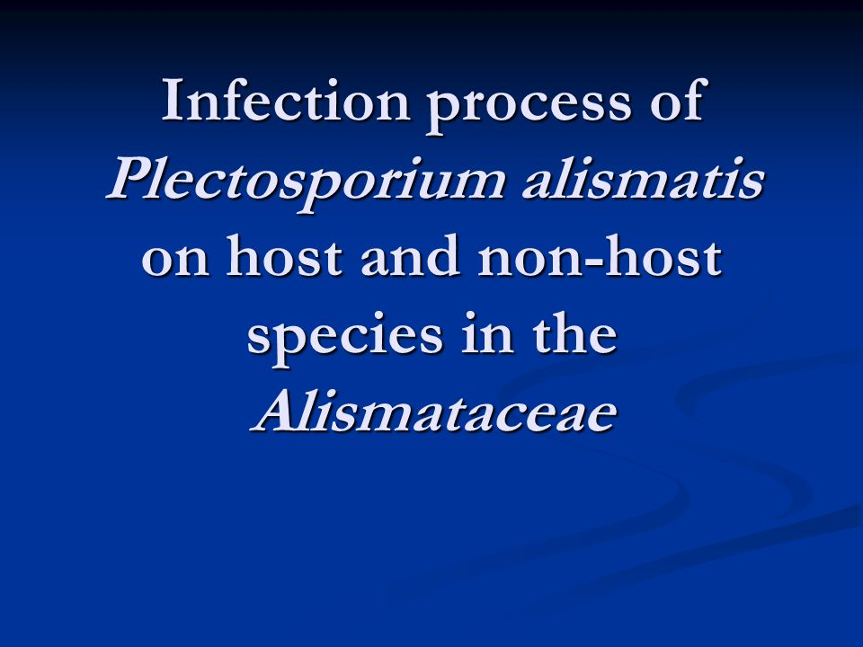 Infection process of Plectosporium alismatis on host and non-host species in the Alismataceae