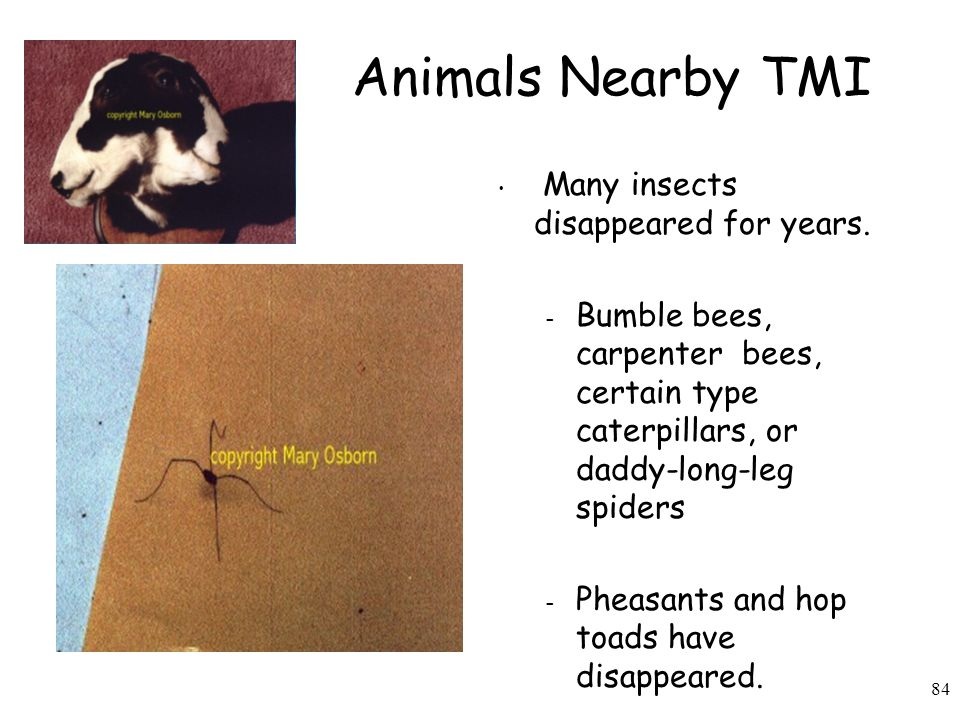 84 Animals Nearby TMI Many insects disappeared for years.