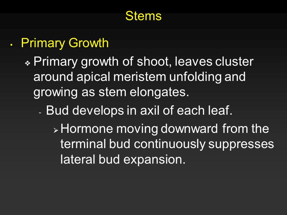 Leaves Mesophyll:  Palisade  Spongy