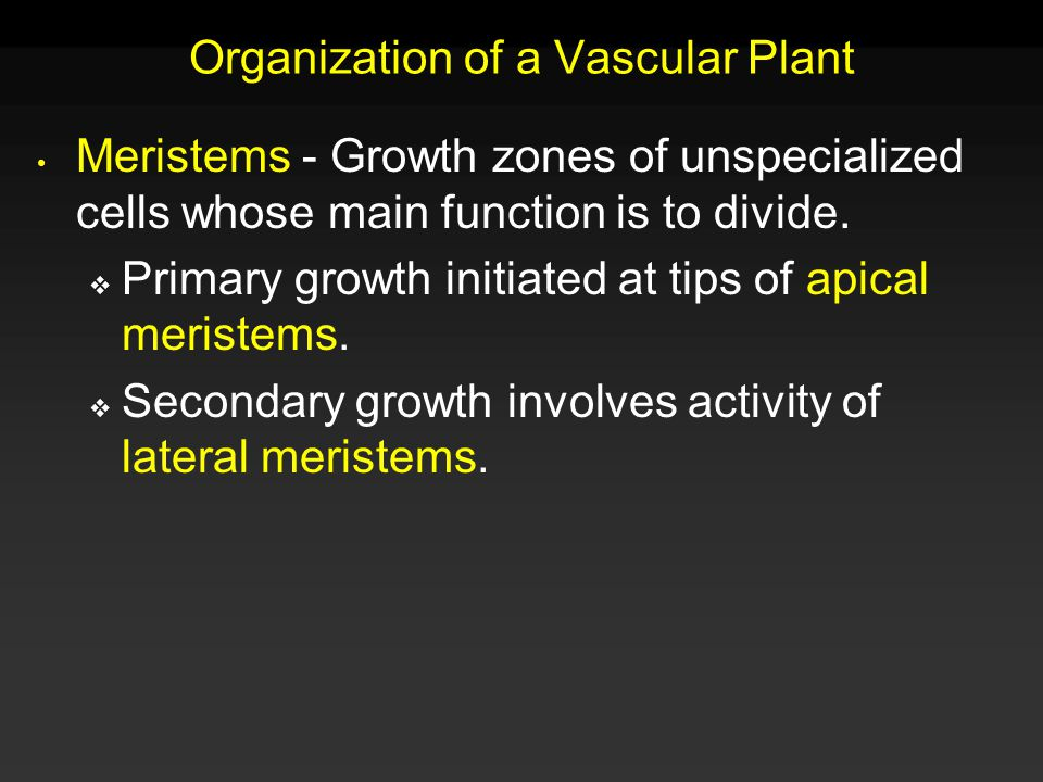 Organization of a Vascular Plant All parts have outer covering of protective tissue and inner matrix of tissue with embedded vascular tissue that conducts water, nutrients, and food.
