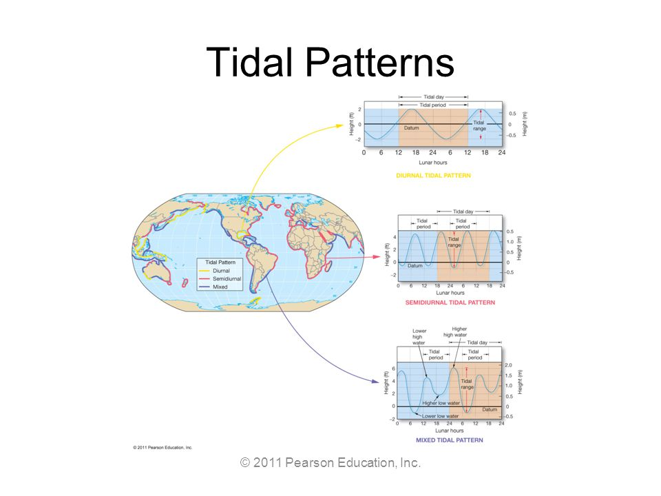 © 2011 Pearson Education, Inc. Tidal Patterns