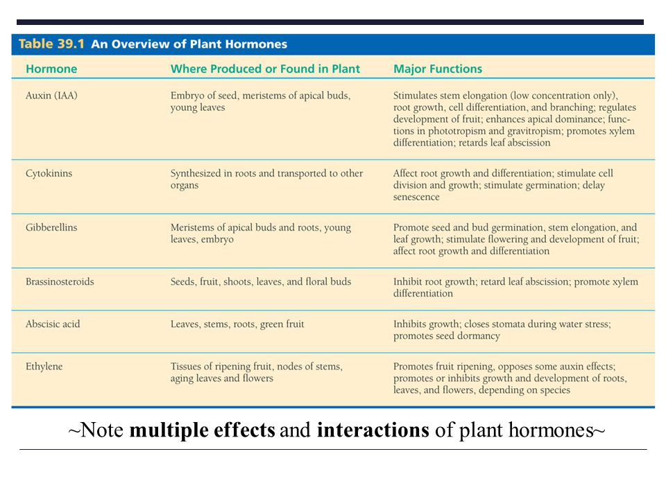 ~Note multiple effects and interactions of plant hormones~