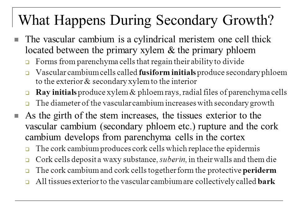 What Happens During Secondary Growth.