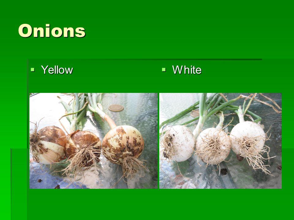 Onions  Yellow  White
