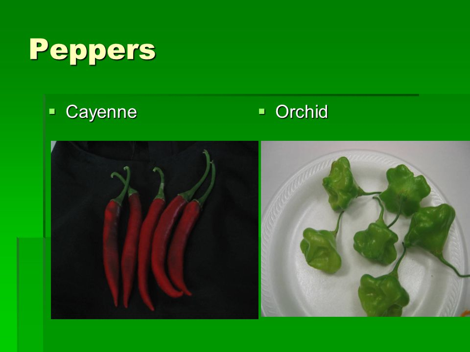 Peppers  Cayenne  Orchid