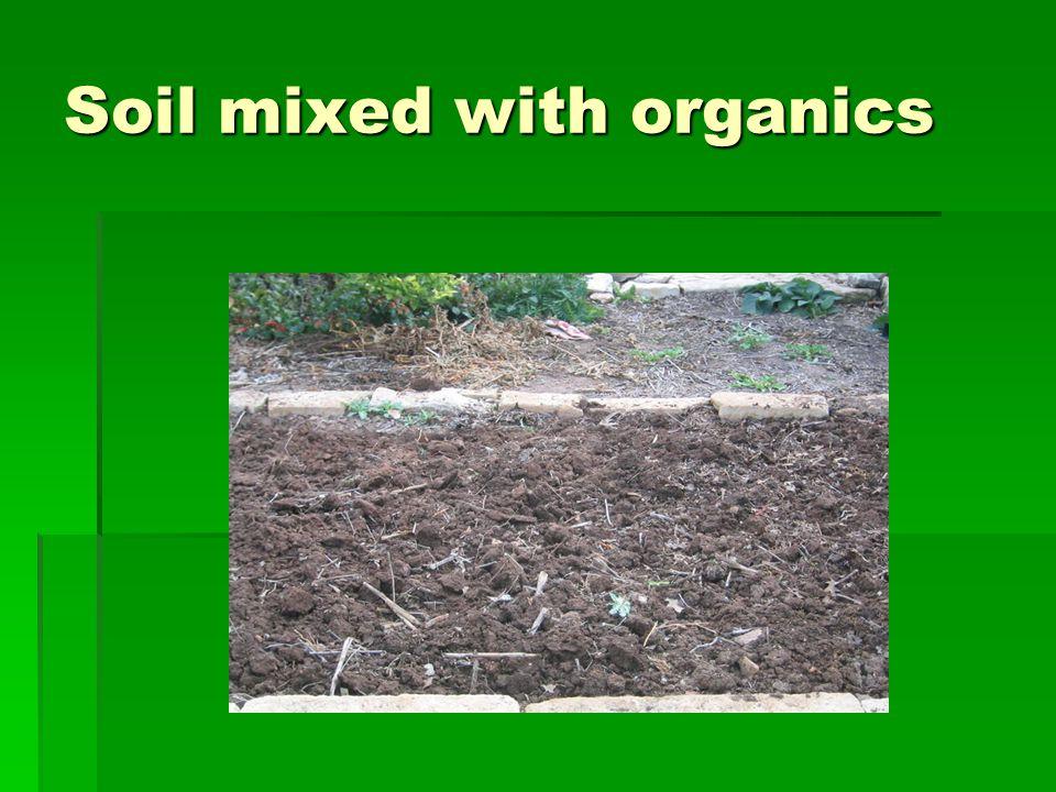 HERBS  Cilantro  Dill  Basils  Oregano  Mints  Salad burnet  Rosemary  Bay leaf  Thyme  Mexican mint marigold  Sage