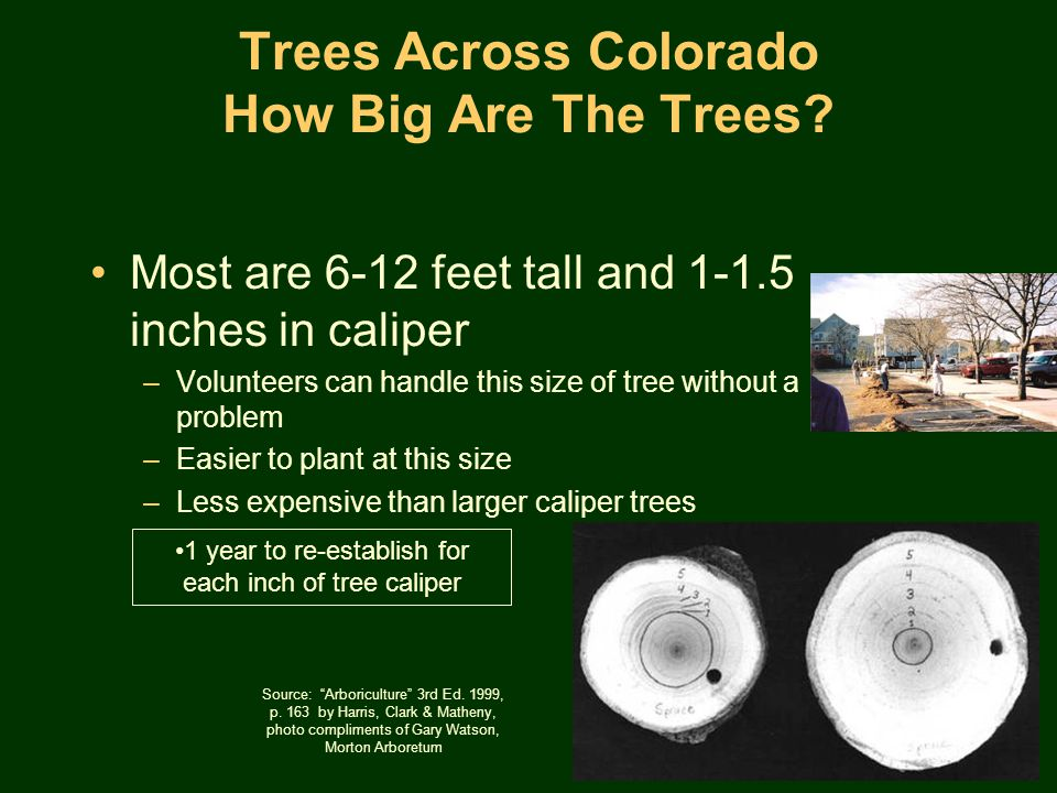 Trees Across Colorado How Big Are The Trees.