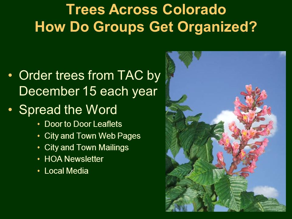 Trees Across Colorado How Do Groups Get Organized.