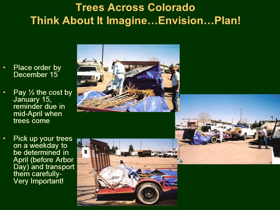 Trees Across Colorado Think About It Imagine…Envision…Plan.