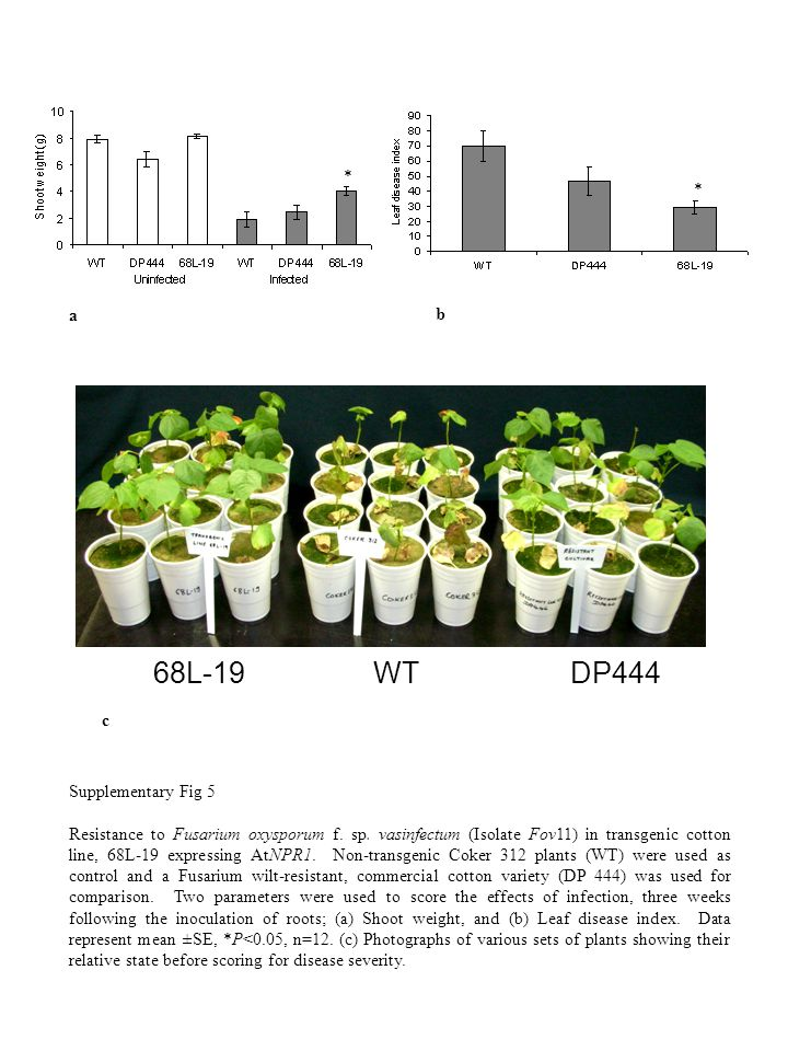 * * 68L-19 WT DP444 a b c Supplementary Fig 5 Resistance to Fusarium oxysporum f.