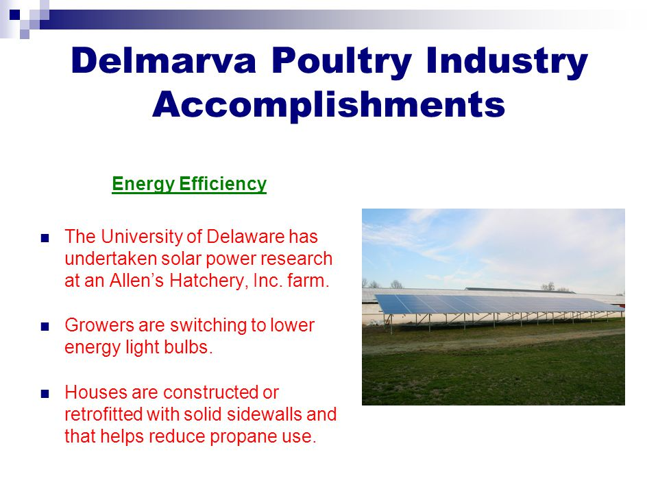 Delmarva Poultry Industry Accomplishments Energy Efficiency The University of Delaware has undertaken solar power research at an Allen's Hatchery, Inc