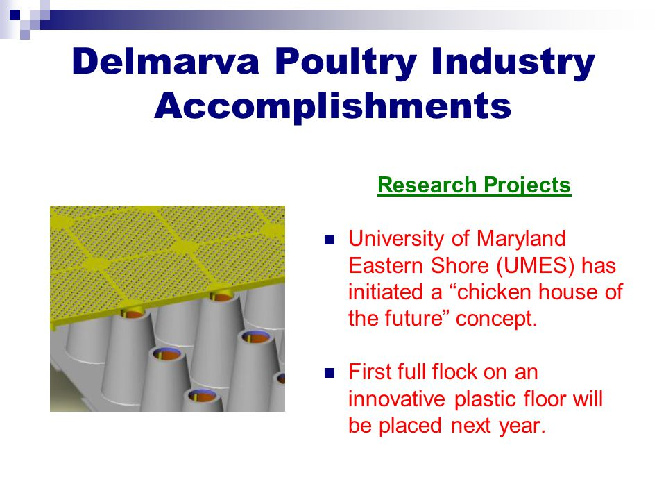 Delmarva Poultry Industry Accomplishments Research Projects University of Maryland Eastern Shore (UMES) has initiated a chicken house of the future concept.