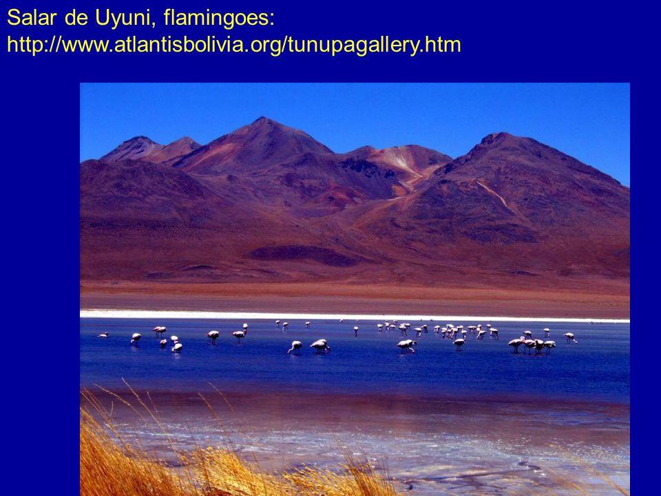 Salar de Uyuni, flamingoes: http://www.atlantisbolivia.org/tunupagallery.htm