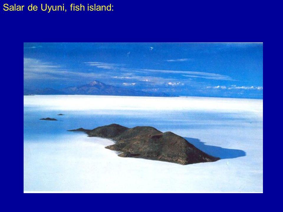 Salar de Uyuni, fish island: