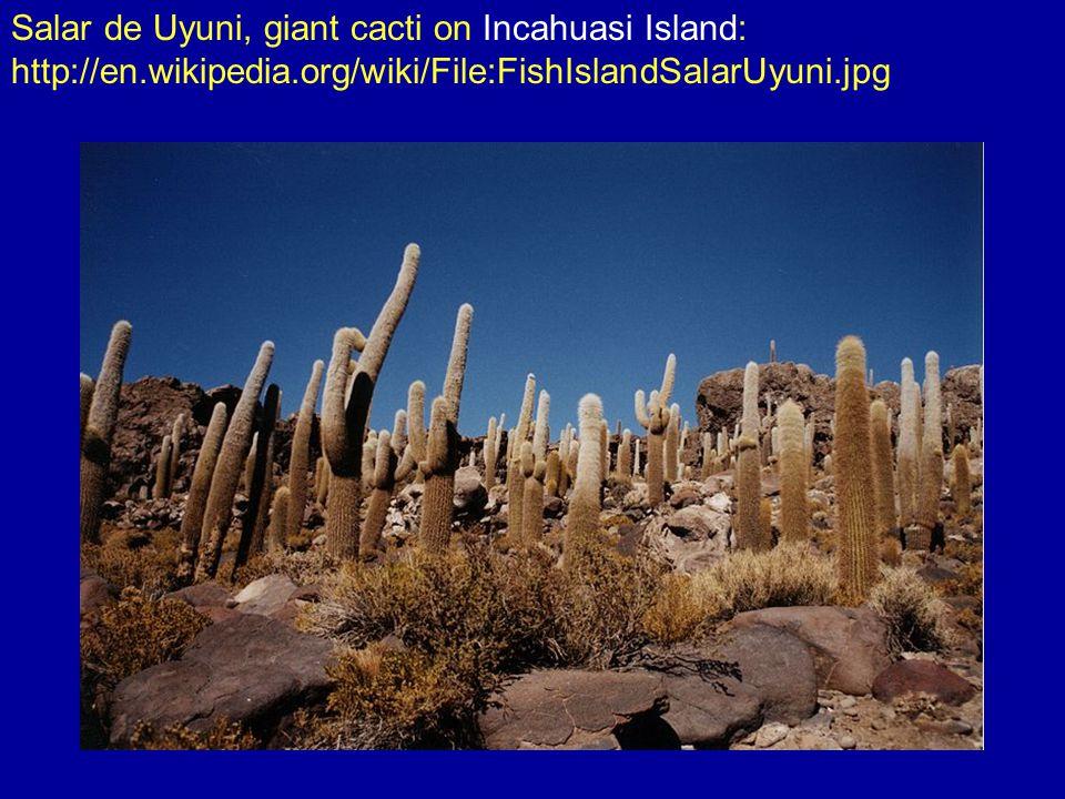 Salar de Uyuni, salt production: http://en.wikipedia.org/wiki/File:Salt_production_Uyuni.JPG