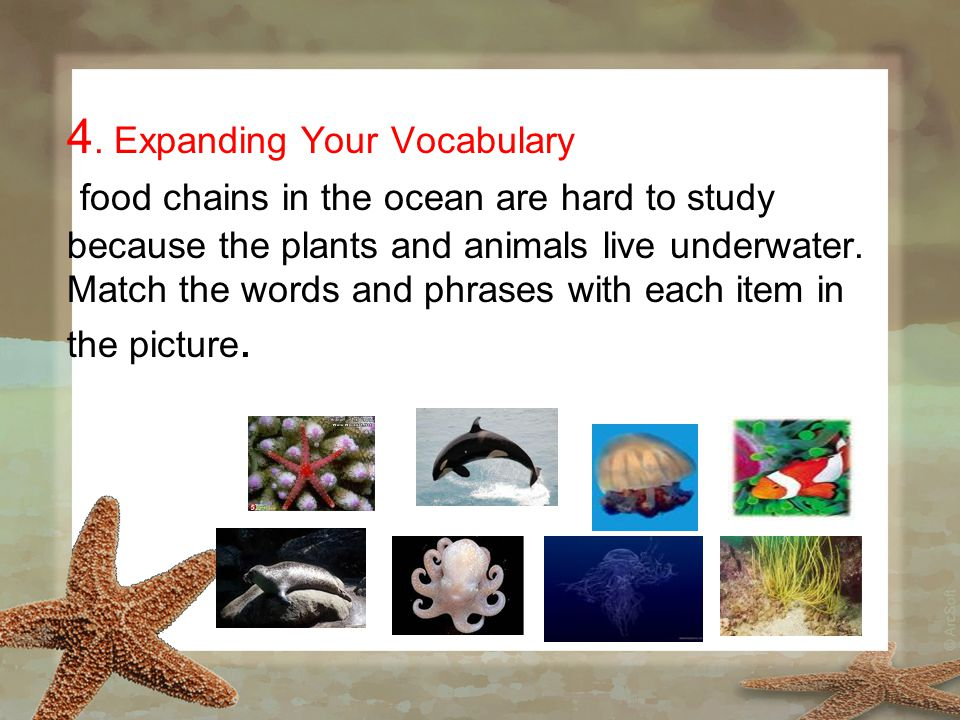 4. Expanding Your Vocabulary food chains in the ocean are hard to study because the plants and animals live underwater. Match the words and phrases wi