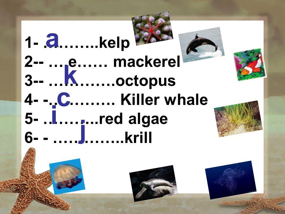 1- ………..kelp 2-- ….e…… mackerel 3-- ………….octopus 4- -…………. Killer whale 5- ………..red algae 6- - …………..krill a k c i j