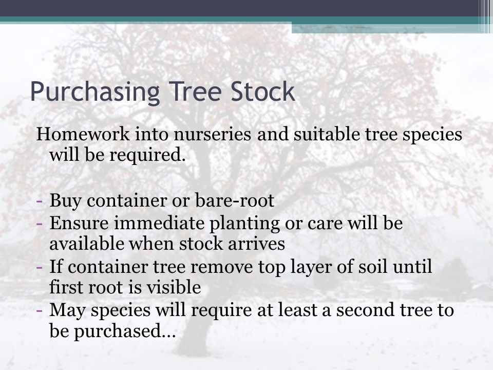 Purchasing Tree Stock Homework into nurseries and suitable tree species will be required. -Buy container or bare-root -Ensure immediate planting or ca